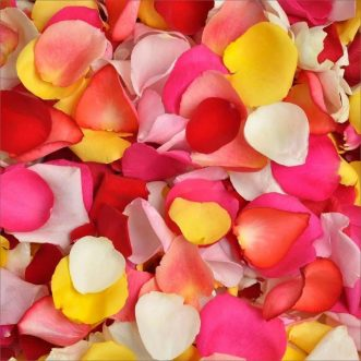 Разноцветные лепестки роз