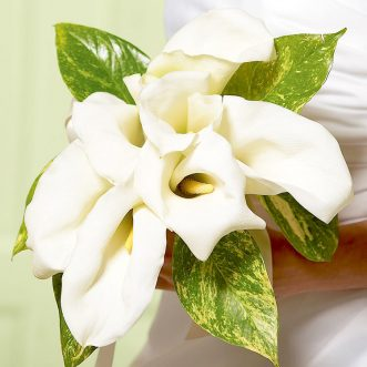 Букет невесты из 7 белых калл