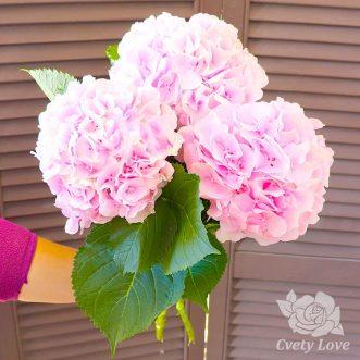 Букет из 3 светло-розовых гортензий